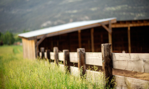 From Mushrooms to Wagyu – Aspen's Farm to Fork Network